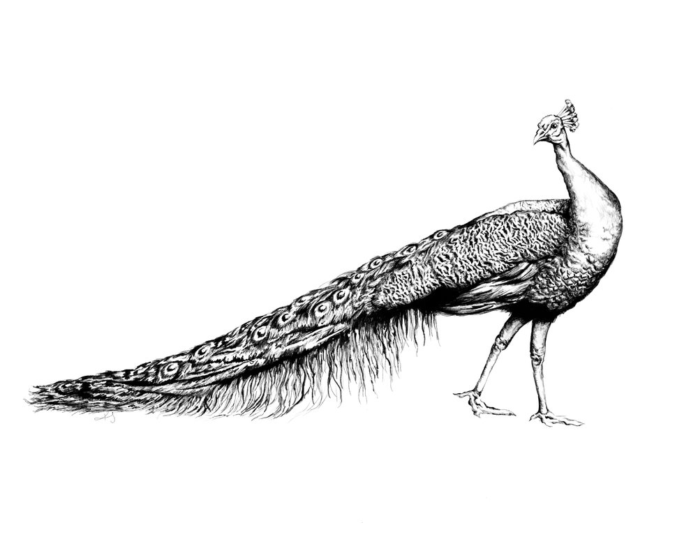 GHD Peacock