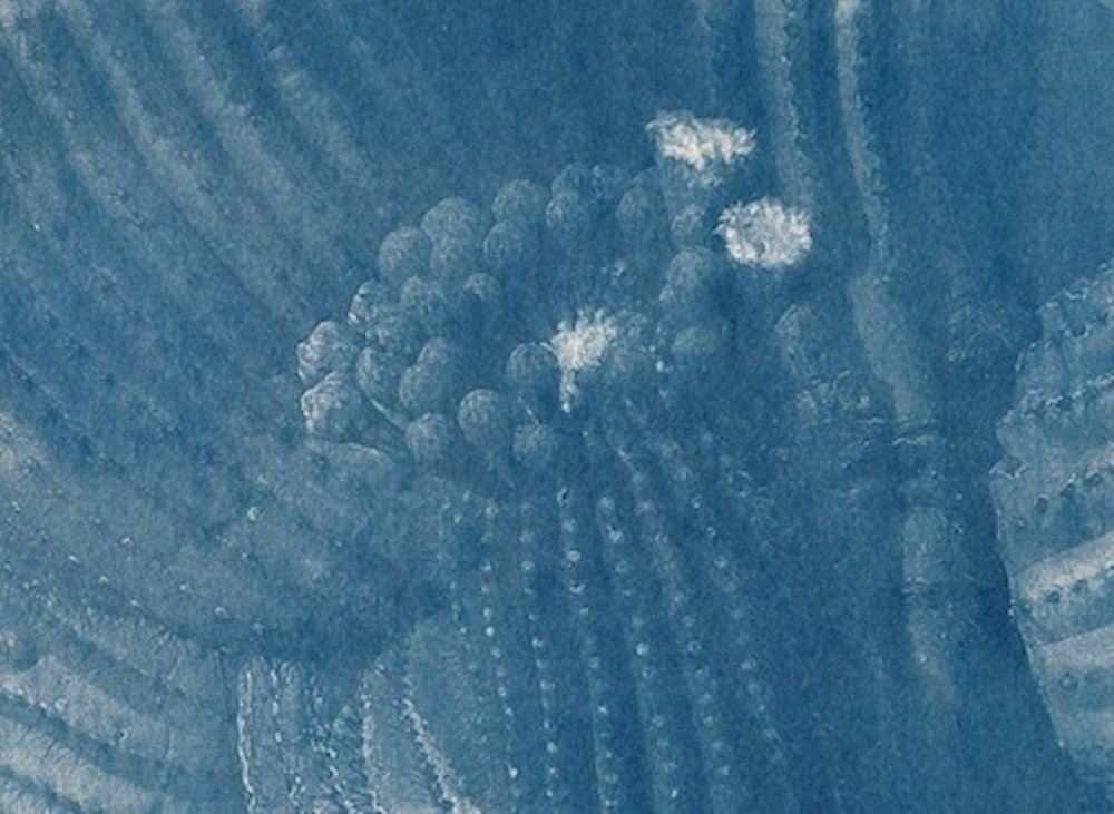 Blue Saguaro
