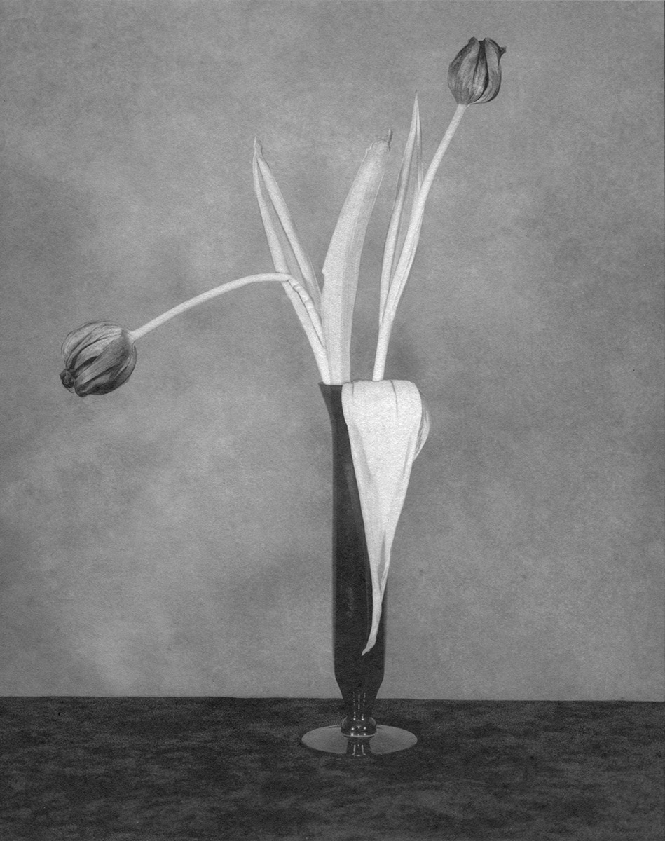 Flower Series #123