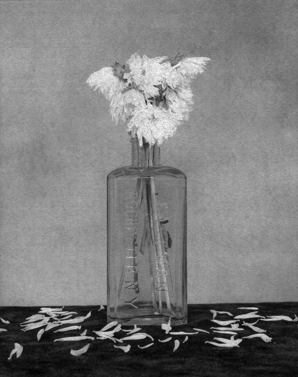 Flower Series #166