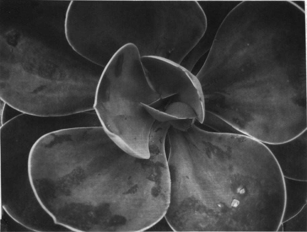 Succulent #2