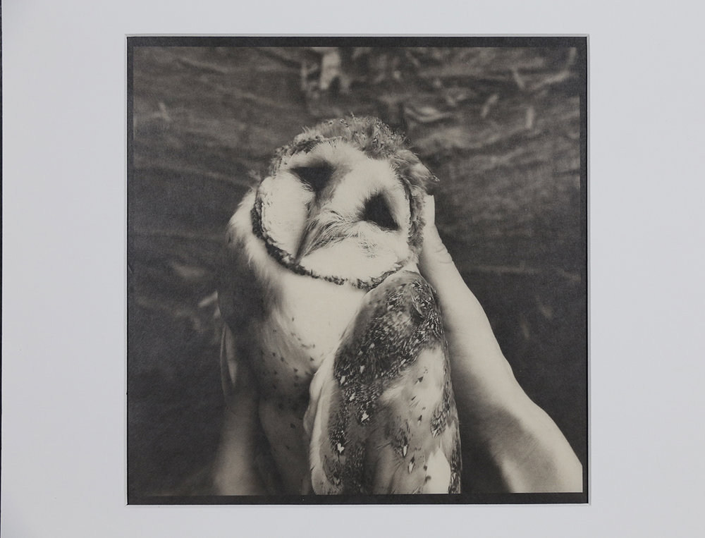 """""""From the Faraway Nearby Series"""", Barn Owl"""