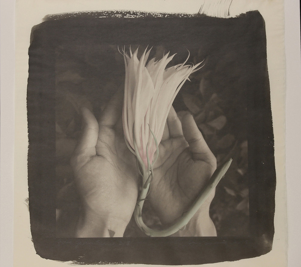 """""""From the Given Series"""" Night Blooming Cereus"""