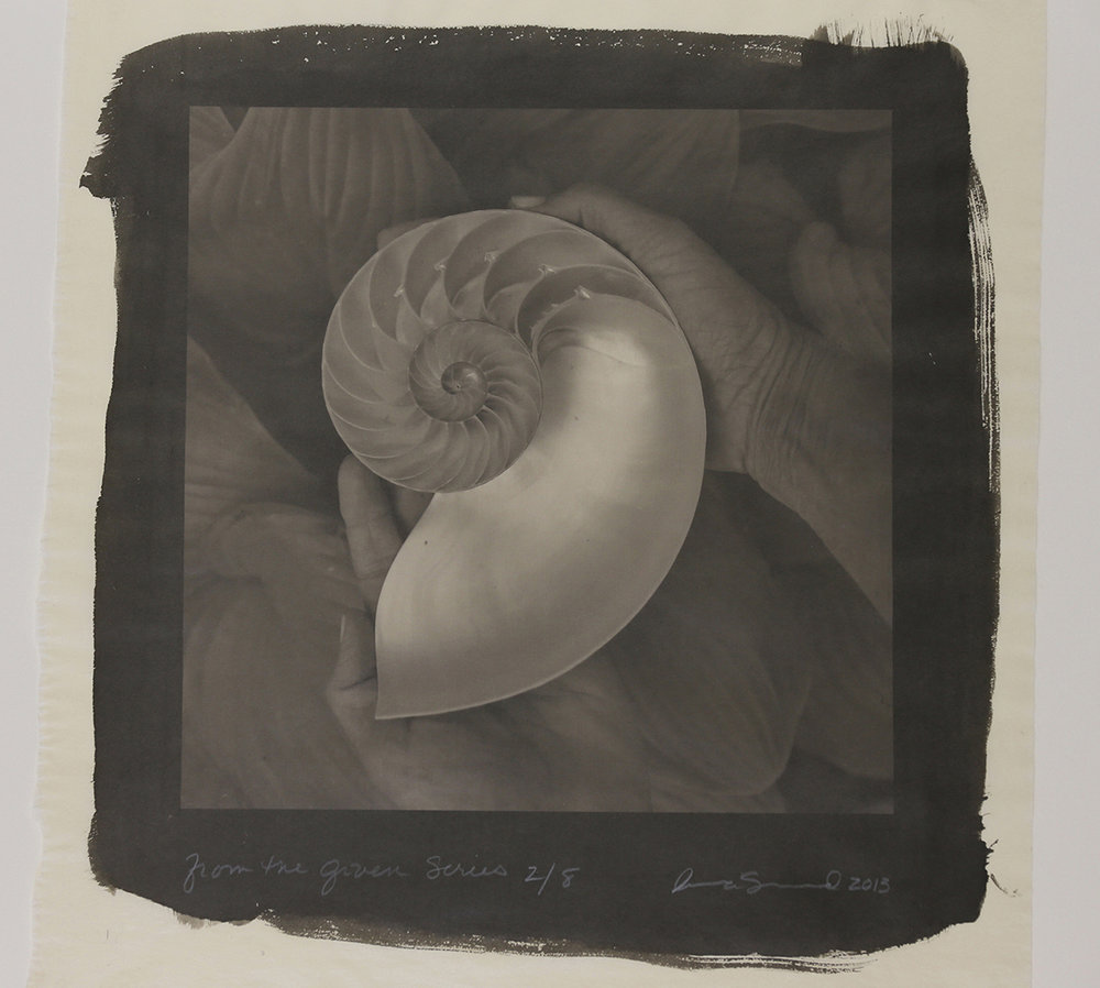 """""""From the Given Series"""" Nautilus"""