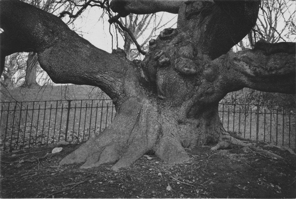 Tree VIII, 2018