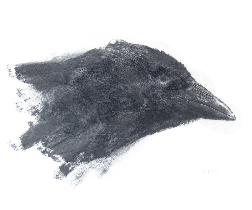 Head of the Magical Magpie Head