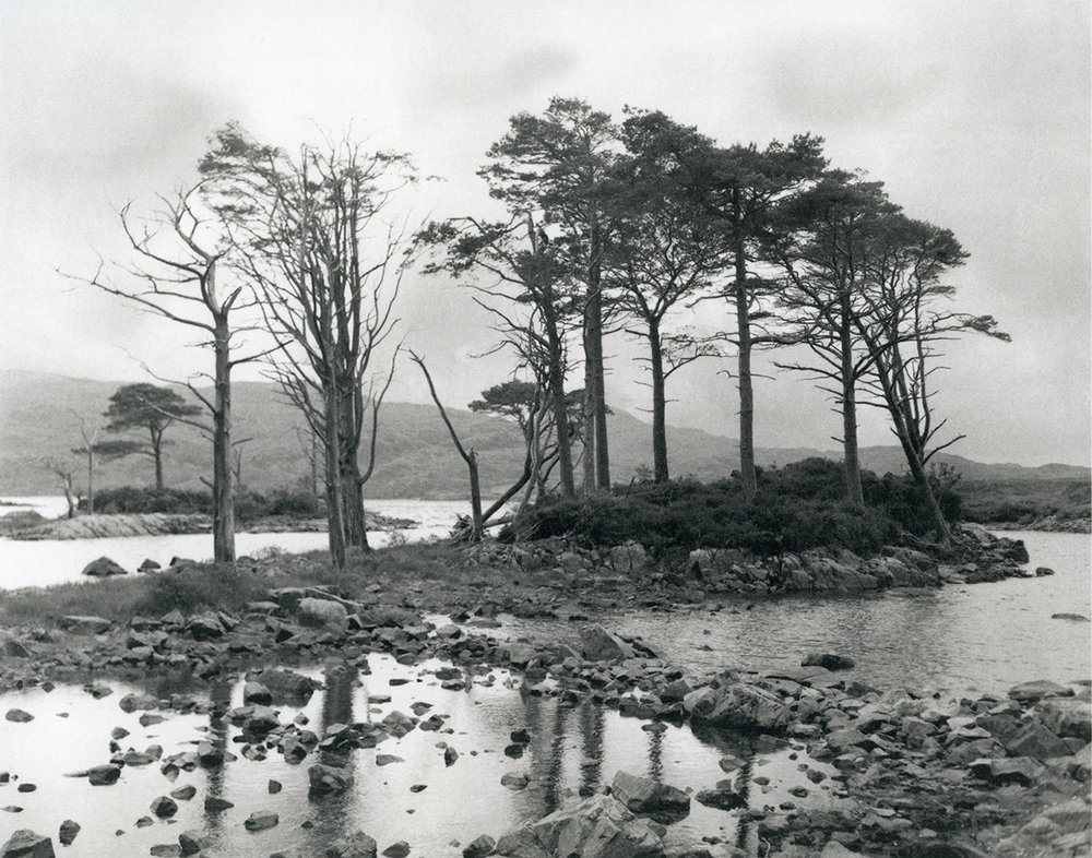 Trees in Ancient Bog