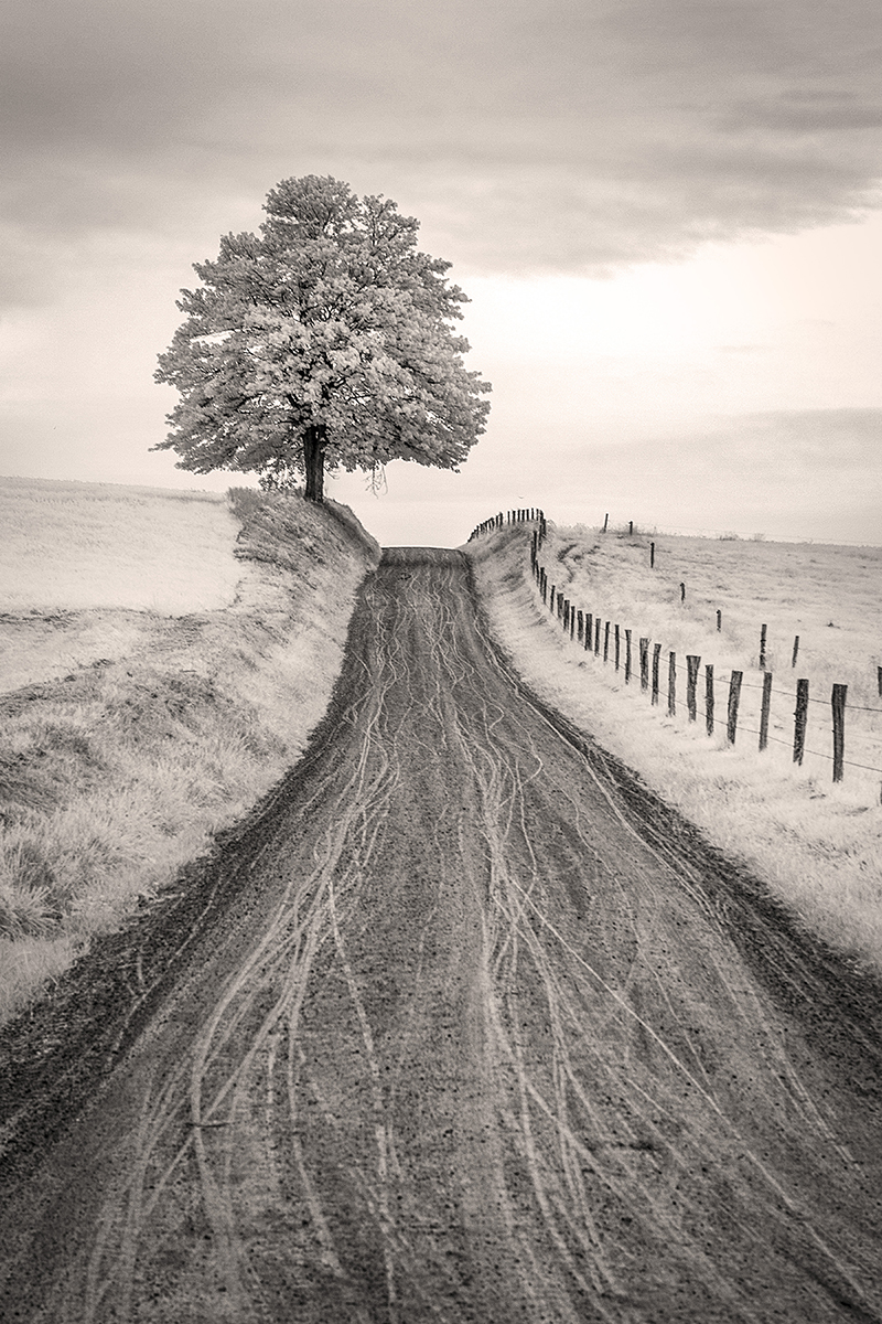 Road, Fence and Tree