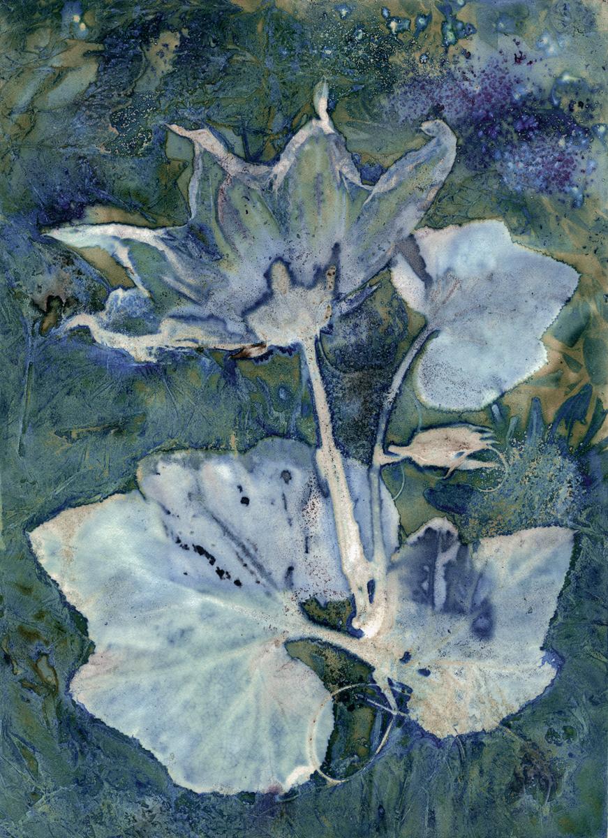 Butternut Squash Blossom