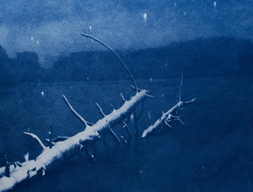 Fallen Tree, Dewey, Quechee Vermont