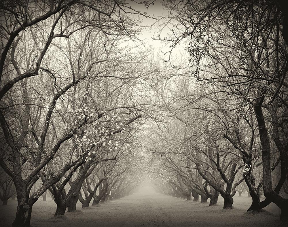 Almonds, Late Winter