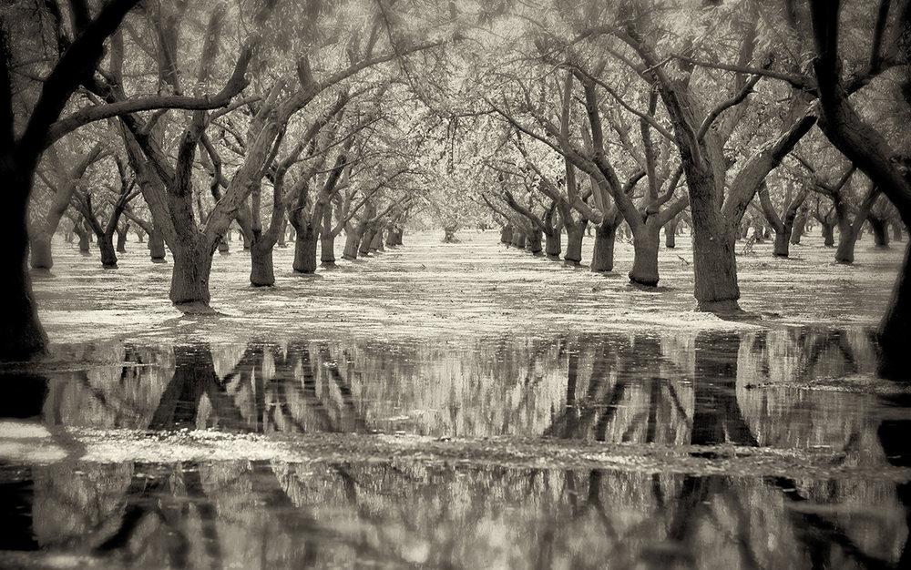 Flooded Almonds, Summer
