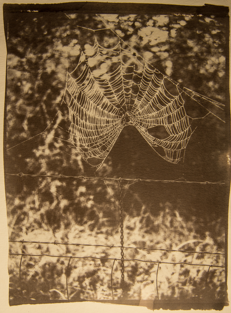 Spider Web with Barbed Wire Fence
