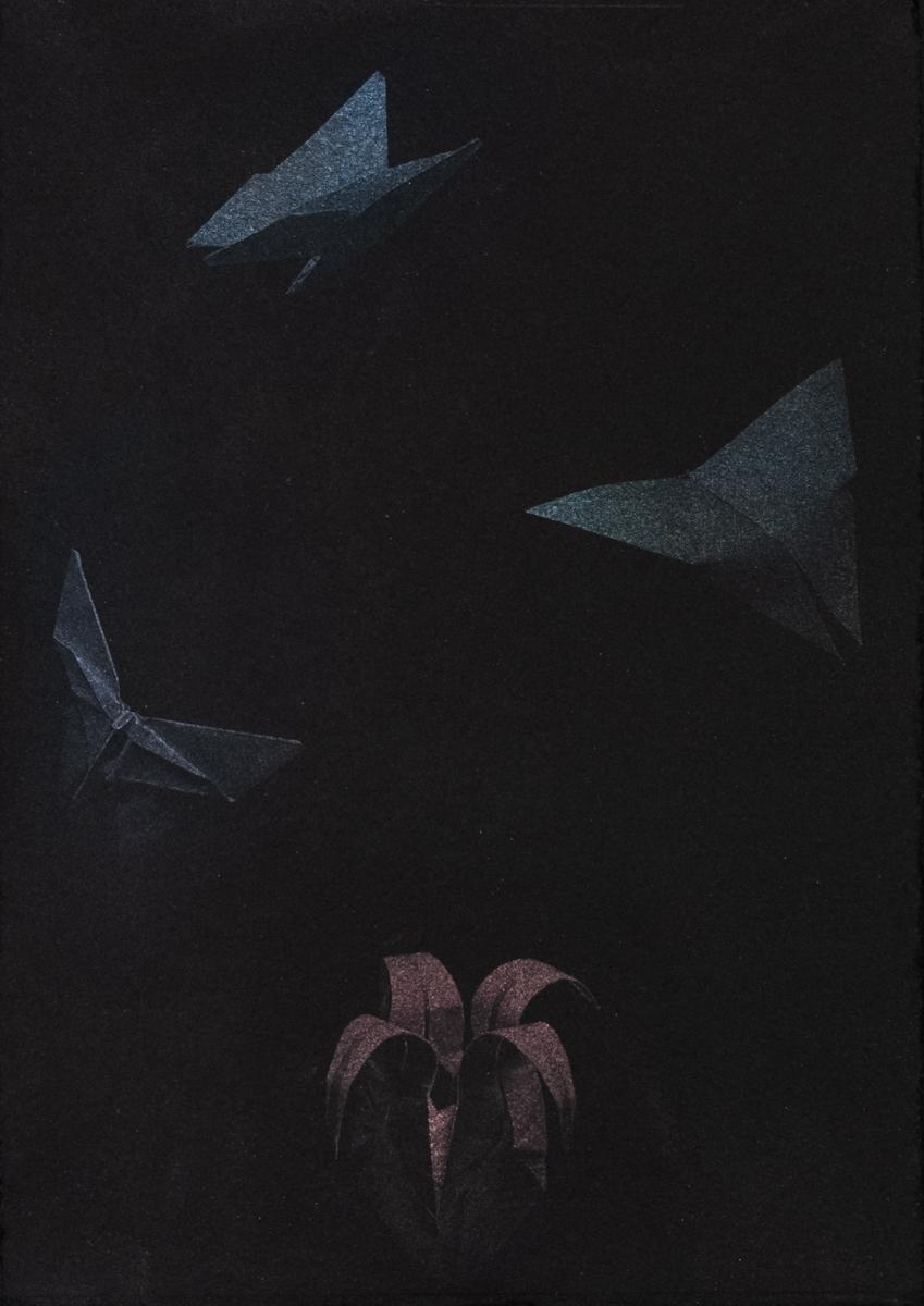 Butterflies and Iris