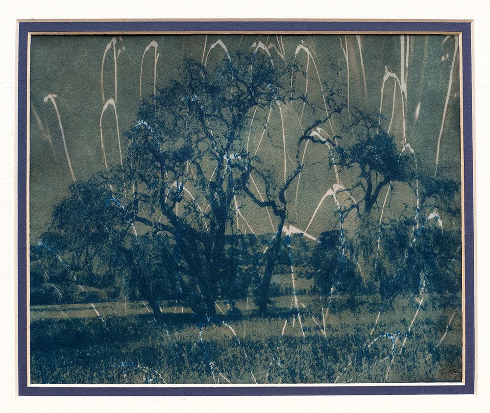 The Oak Tree Meets the Meteorite Shower