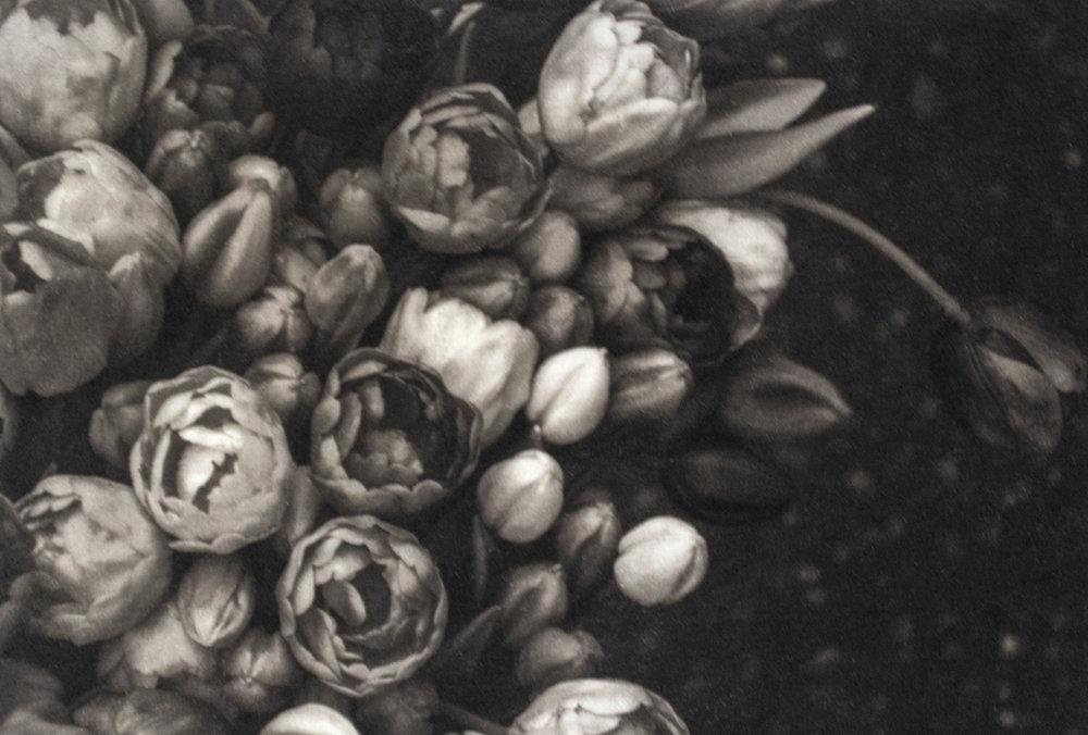 Amsterdam Tulip Trove