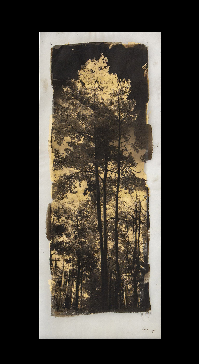 """Maxine Chelini  platinum palladium on vellum backed with gold leaf  """"Images range between 11 - 14 inches on the long side""""  NFS  chelini_maxine_5, entry #1071"""