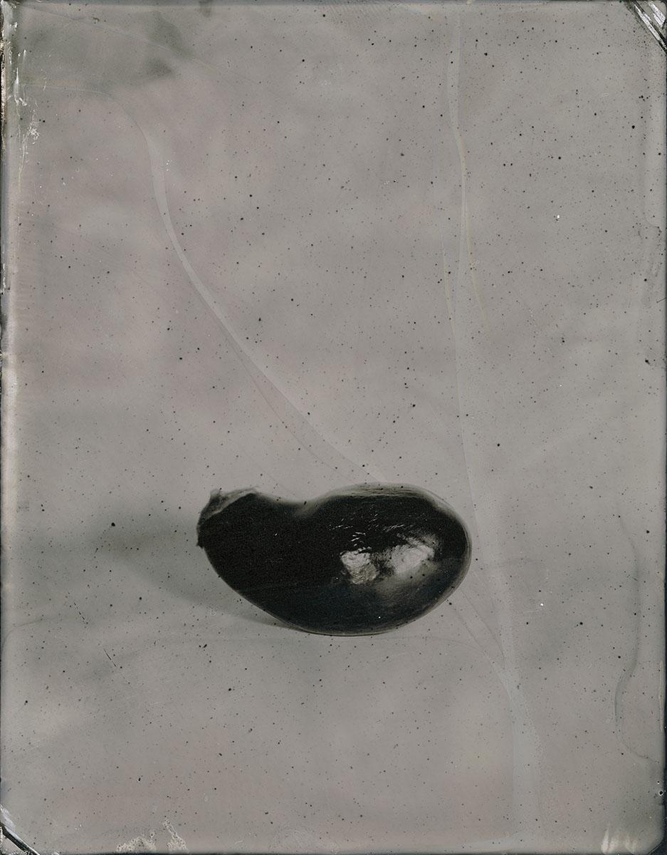 Fructus: Eggplant