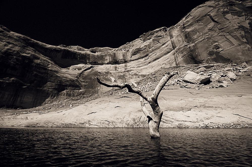 Lake Powell Tree