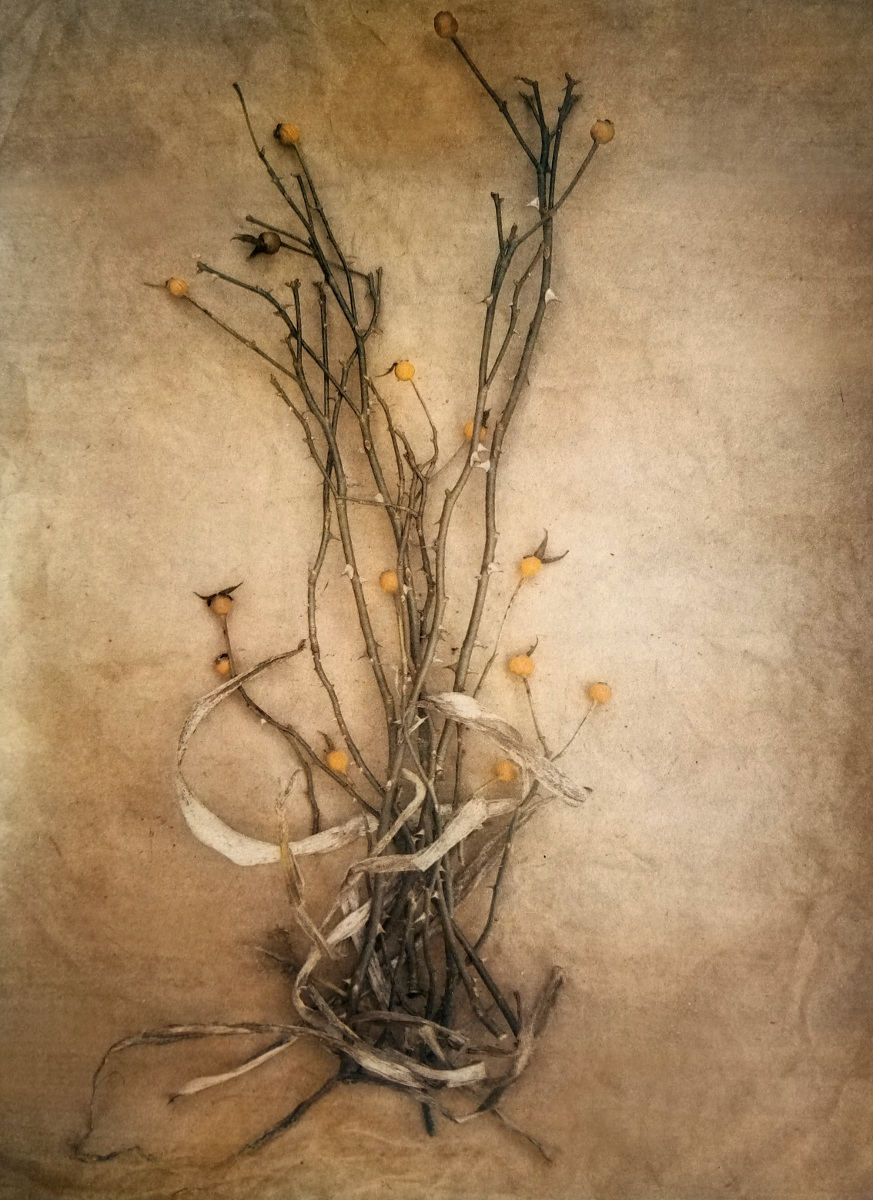 Rose Hips, 2019 (Limited Edition 1/5) - Honorable Mention