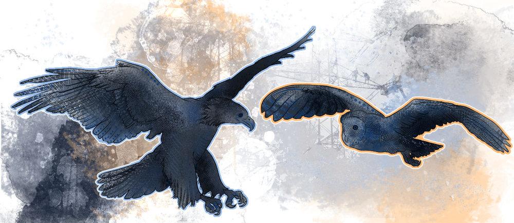 owl-eagle.jpg