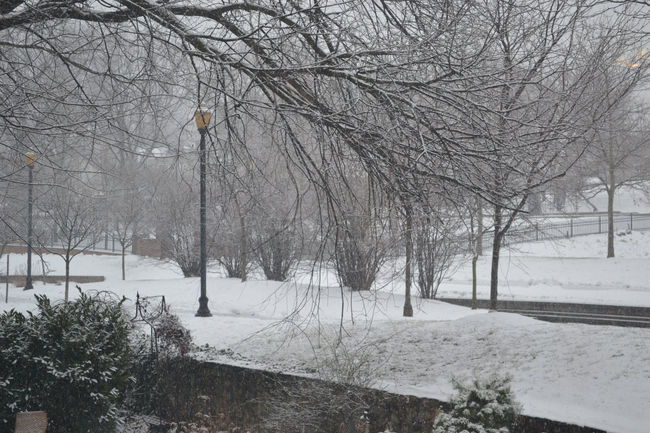 A wintery view
