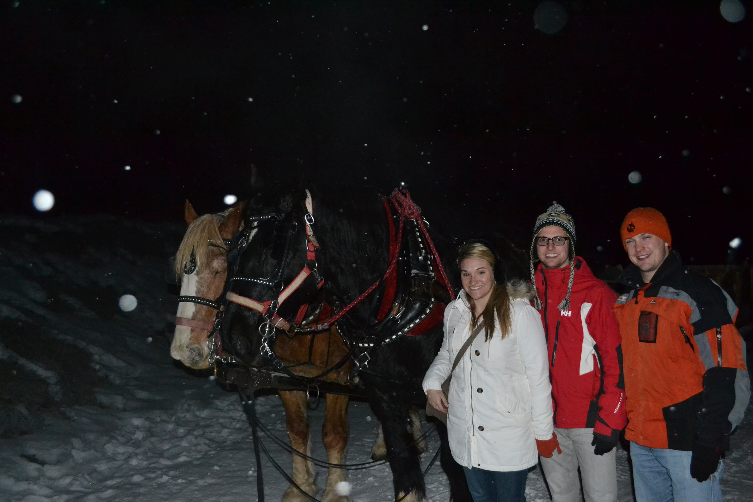 photo with the horses