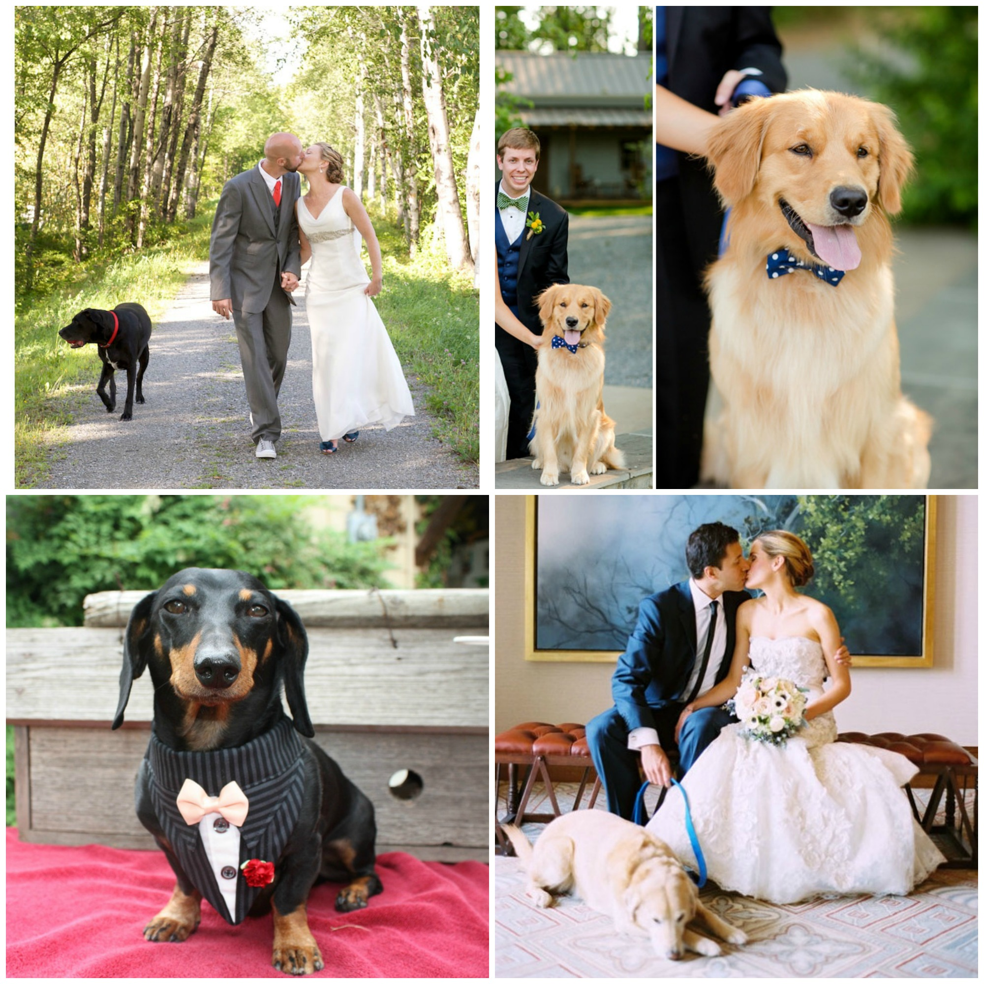 dogs in weddings collage