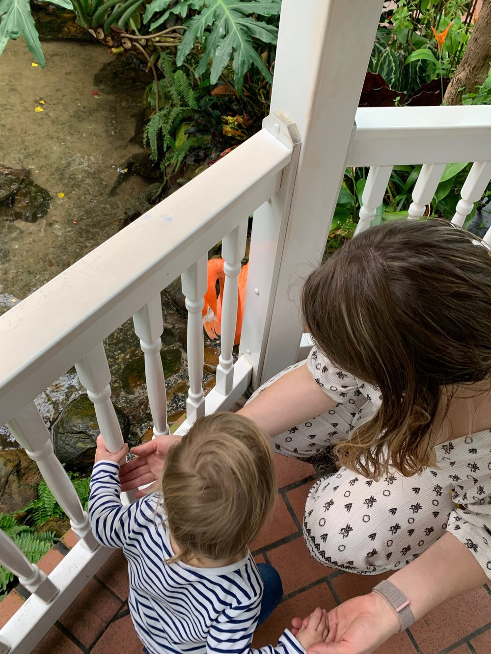 Flamingo Watching at the Key West Butterfly Conservancy | Family Friendly | Travel | By Sarah Rae