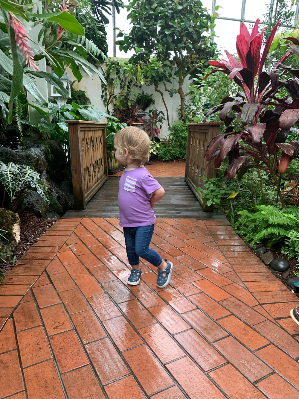 Key West Butterfly Conservancy | Family Friendly | Travel | By Sarah Rae