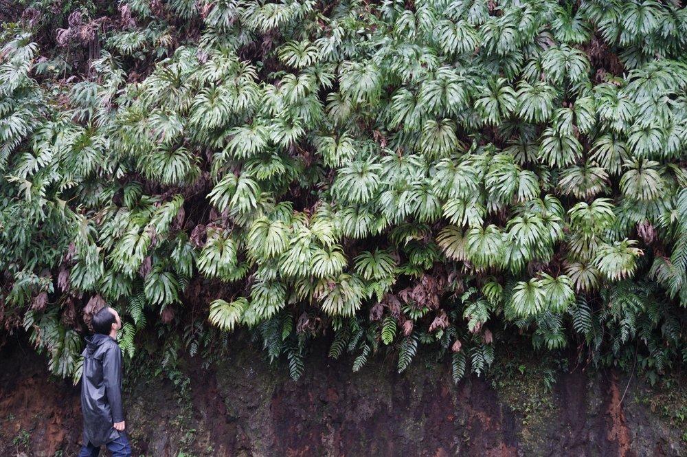 """凌宗涌""""跟着花开去旅行"""",带领大家走进台湾山林,探索自然。"""