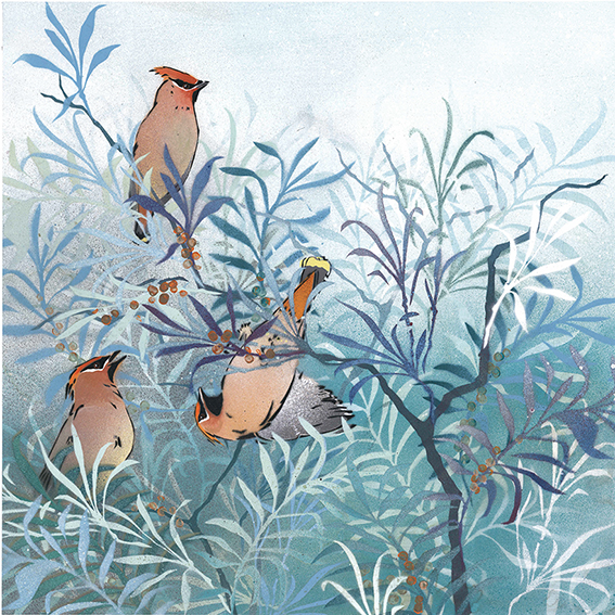 Waxwings in Sea Buckthorn  Mixed media painting on card. 44cm x 44cm. Unframed fine art gicl é e print. Limited edition of 50.