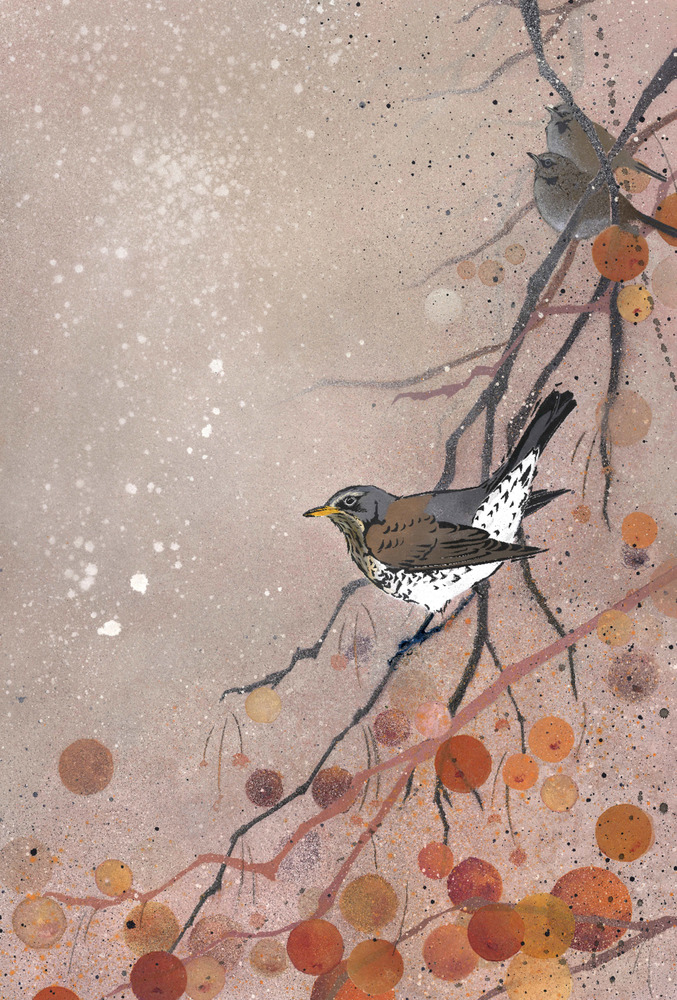Fieldfare in Crabapple