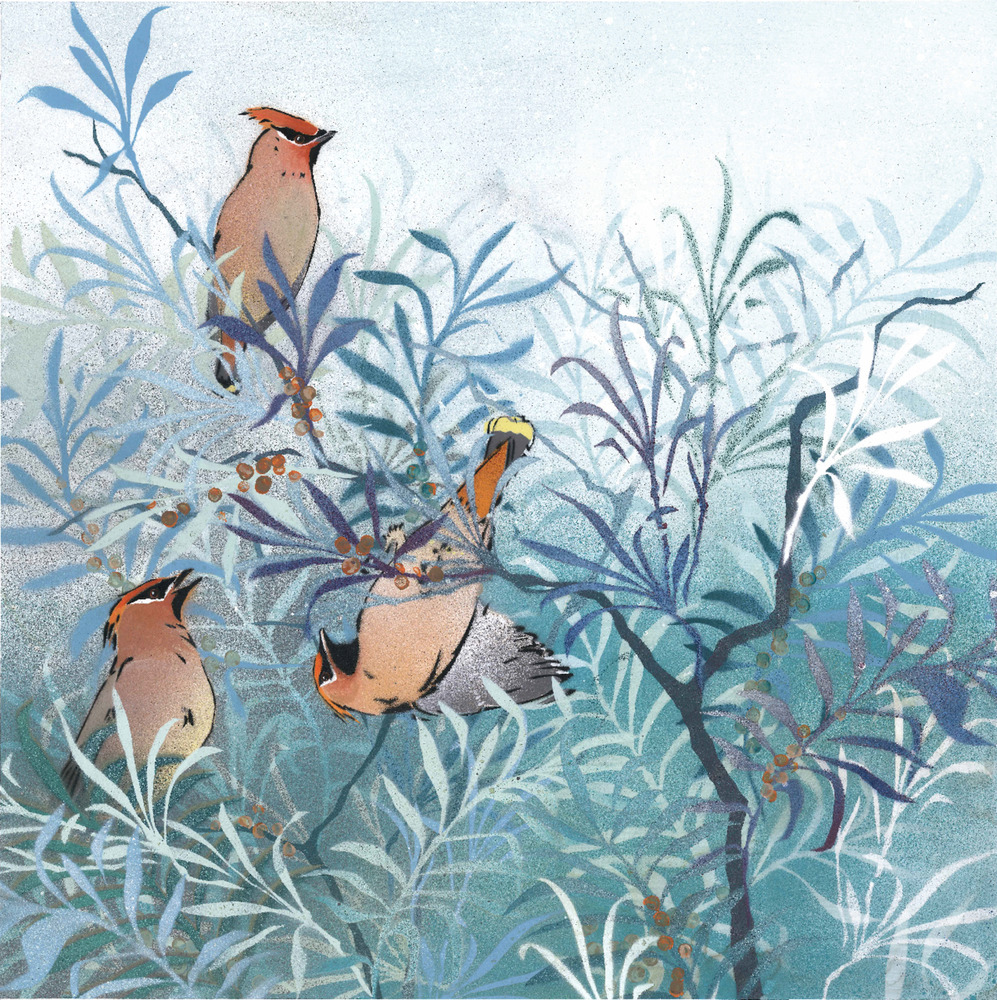 Waxwings in Sea Buckthorn