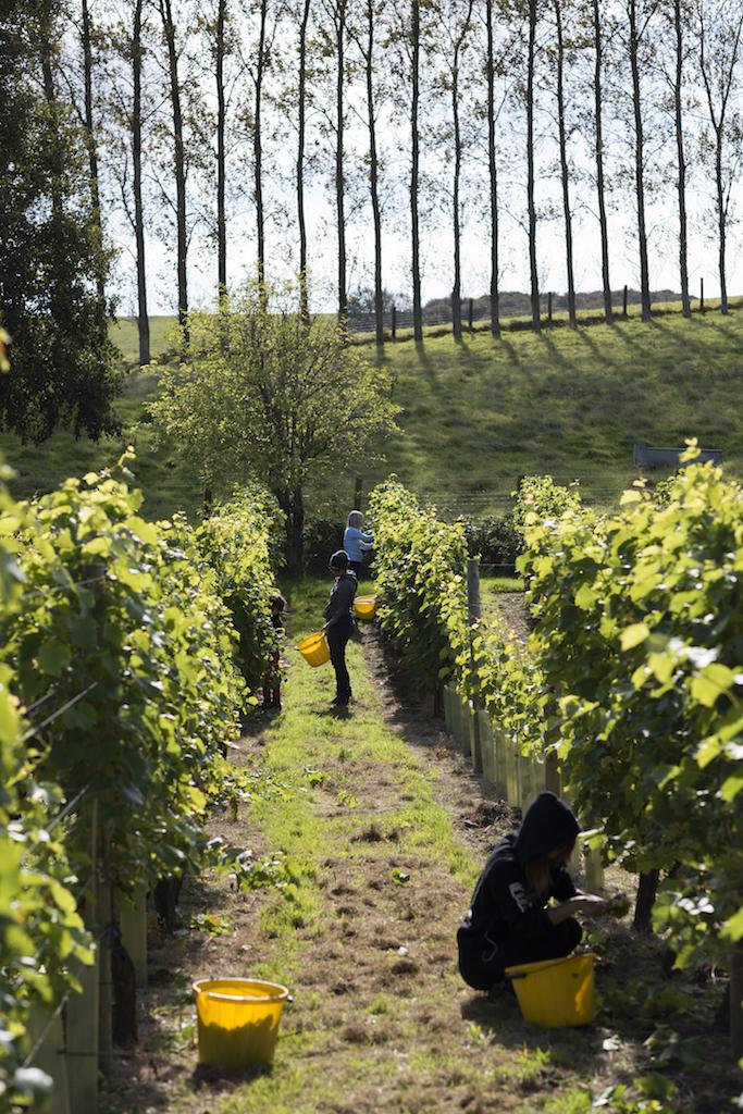 BB Harvest 17 217.jpg