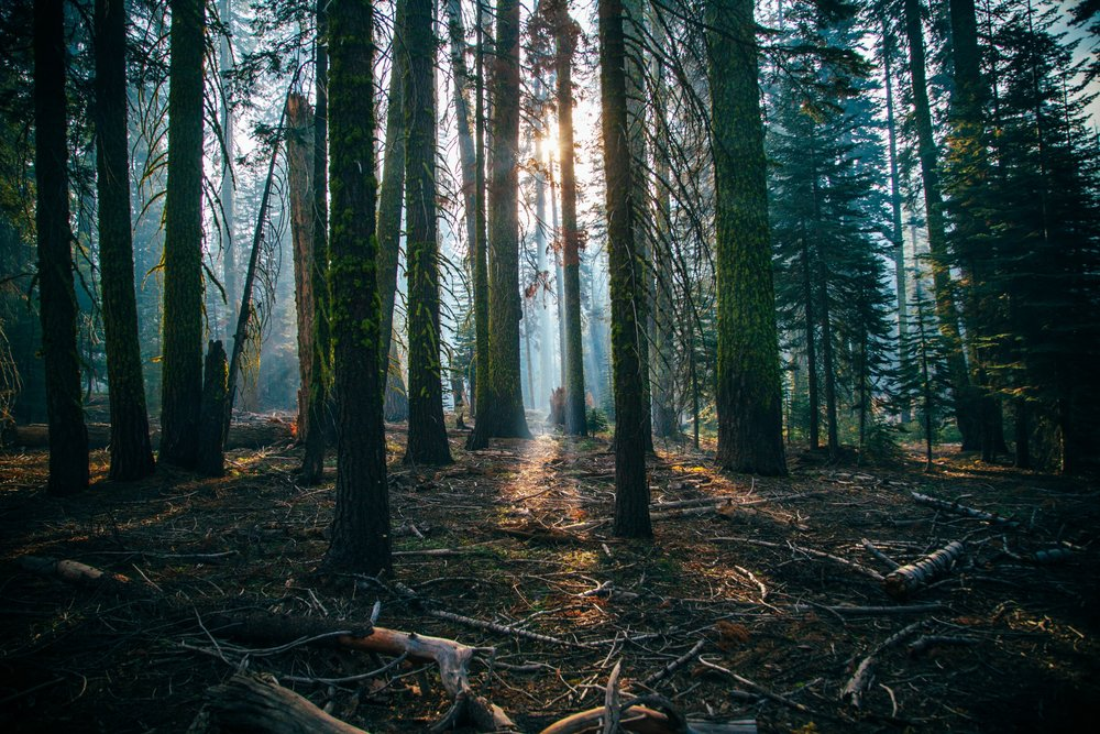 Forest -
