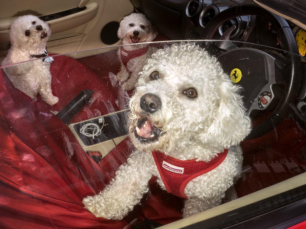 Dougie Wallace - Harrodsburg Dogs.jpg