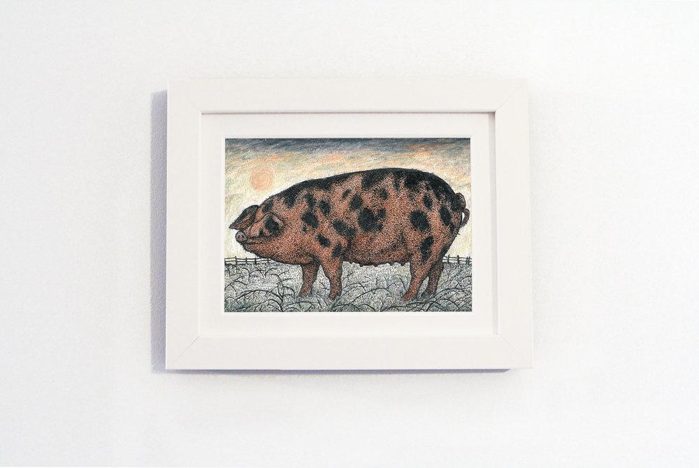 oxford sandy and black pig white frame.jpg