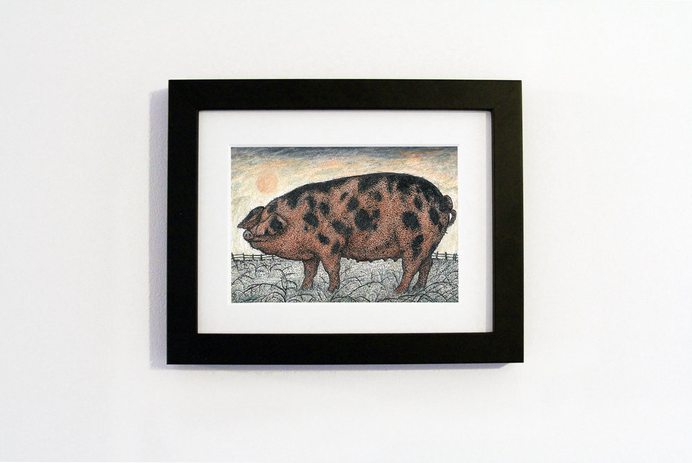 oxford sandy and black pig black frame.jpg