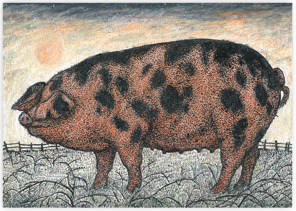 oxford sandy and black pig.jpg