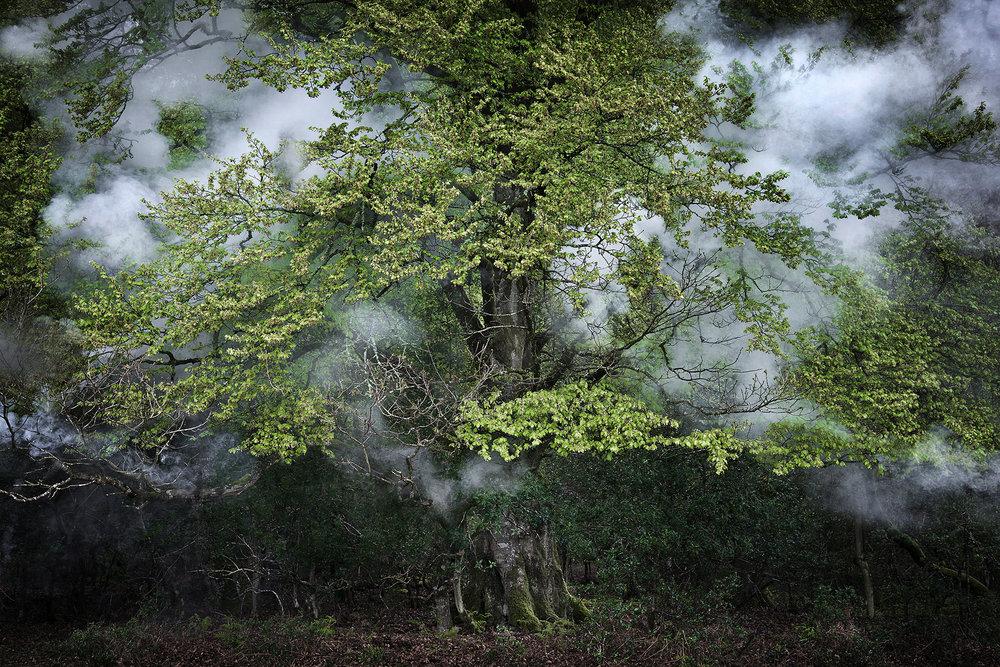Ellie Davies -  Between the Trees 14, 2015 -    EllieDavies.com