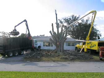 sm-prtree-tree-cutting-2.jpg