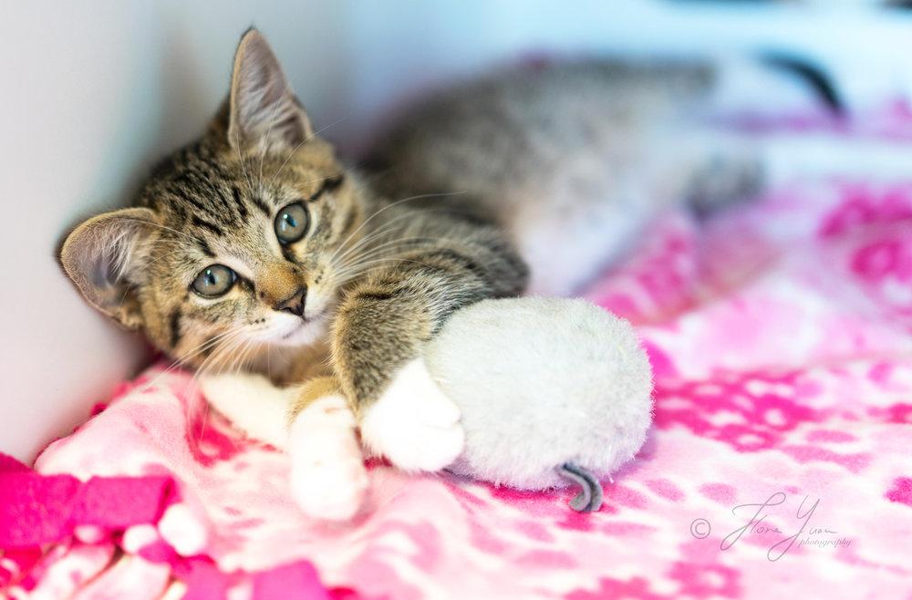 _DSC1912_kitten.jpg