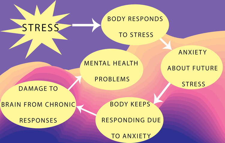 Here's an example of one way we think childhood stress increases risk for mental health problems. Part of what makes stress so toxic is that if we have anxiety about future stress, we can keep responding to threats even if they're not there, which damages our brains and our bodies.