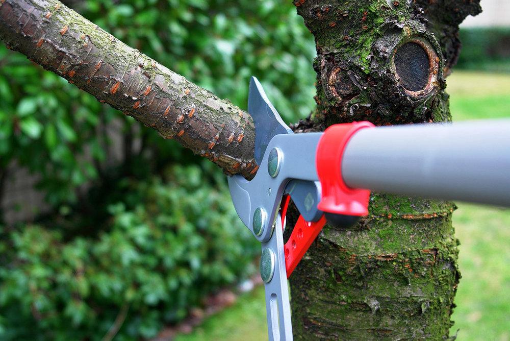 TreeTrimming2.jpg