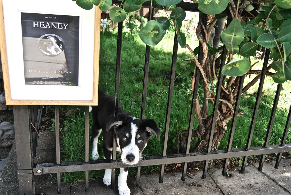 Heaney The Sculptor's Dog is always eager to welcome. When he isn't busy chewing the Sculptor's steelcap boots, he documents his life on his own Facebook page @HeaneySculptorDog.