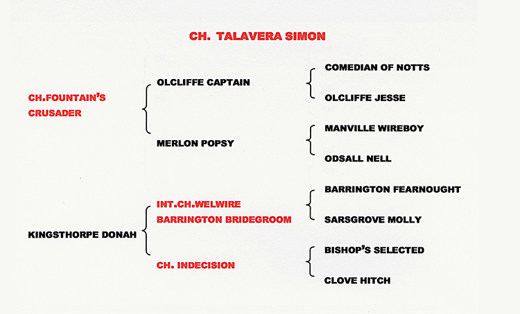PEDIGREE OF  CH TALAVERA SIMON