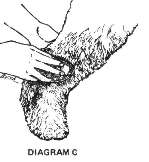 DiagramC.jpg