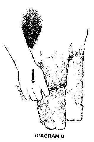 Diagram_D.jpg