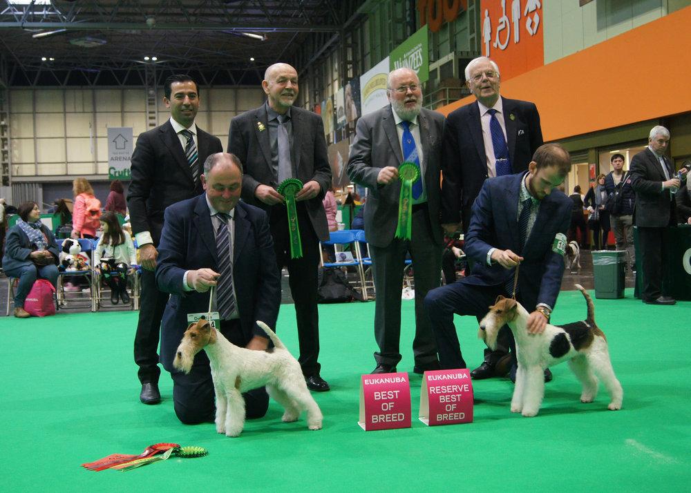 BOB (left) MLT IVRAM SPOT ON. RBOB (right) ME/CZ/HU CH QUIRINUS V WALDHAUS JCH/D, JCH/A, JCH/HR